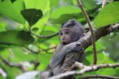 Beautiful Baby Monkey Playing In The Trees