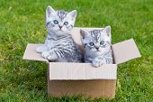 Young cats in cardboard box on grass
