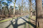 foto of paving stone  - Country road paved with paving bricks and trees on both sides of the road - JPG