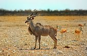 Isolated Kudu in Etosha National Park