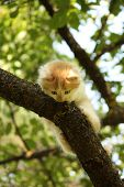 Cute Kitten Sitting On The Tree Branch