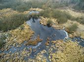 Aerial picture of swamp in winter