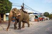 Elephant in Sihanoukville