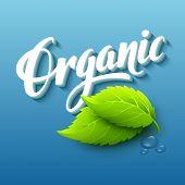 Realistic organic logo. Vector illustration