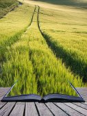 Beautiful Landscape Wheat Field In Bright Summer Sunlight Evening Conceptual Book Image