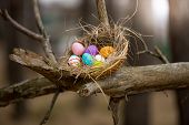 Birds Nest With Easter Eggs On High Branch At Forest