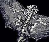 stock photo of impressionist  - a Flying Oriental Dragon is shown here in black and white done in impressionistic art style for avid art lovers and lovers of all things traditionally oriental - JPG