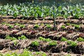 vegetable farm background