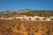 stock photo of costa blanca  - Vineyards under Mediterranean sunshine in inland Costa Blanca Spain - JPG