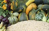 Varieties Of Pumpkins And Squashes
