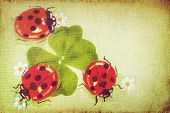 Vintage ladybugs on the clover leaf