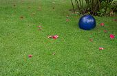 Green lawn with rose petals and blue ball