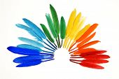 Rainbow Of Colorful Feathers