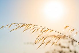 foto of pampa  - pampas with sun and sky in the background - JPG