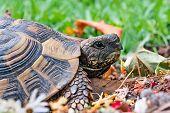image of tortoise  - detail of one tortoise in green environment - JPG