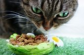 stock photo of tabby cat  - A portrait of a beautiful green eyed tabby cat with cat food - JPG