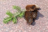 pic of pine cone  - Four pine cones resting on Marble with fir twig - JPG