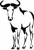 pic of wildebeest  - wildebeest  - JPG