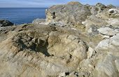 image of petrified  - Fossil Forest near Lulworth Cove Petrified remains of a 140 milion year old tree stumps - JPG