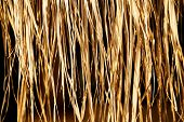 stock photo of dry grass  - Image of a Yellow dry grass (reed) background.