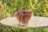 picture of dogwood  - The photo shows standing on a table with a vase of dogwood berries - JPG