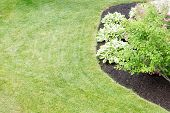 picture of manicured lawn  - Mulched flowerbed with decorative hosta plants cultivated for their ornamental foliage in a neatly manicured green lawn in a formal landscaped garden viewed high angle - JPG