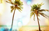 picture of serenity  - Serenity tropical beach - JPG