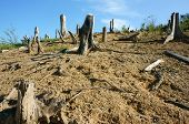 picture of deforestation  - Deforestation at Vietnam countryside stump solitary jungle damaged make change climate living environment is narrow this is global problem desolate landscape on day with dry tree - JPG