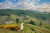 stock photo of broom  - italian landscape  - JPG