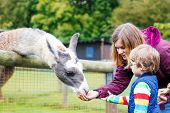 stock photo of lamas  - Happy little blond kid boy and his mother feeding big lama on an animal farm - JPG