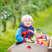 image of trolley  - Adorable funny toddler boy sitting in wooden trolley with red apples and eating fruits - JPG