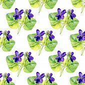 foto of violet  - Vector seamless background with watercolors violets on white background - JPG