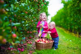 pic of orchard  - Child picking apples on a farm in autumn - JPG