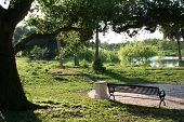 Park Bench Under The Bid Oak Tree By Lake