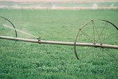 Irrigating Alfalfa Field