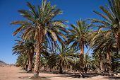 Date Palm Farm