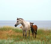 A Horse And A Foal