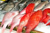 Whole fresh raw fish presented for sale in market