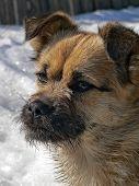 Kleiner Hund mit kleinen Bart 2