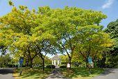 Árvores altas nos parques