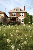 Abandoned houses in Detroit, Michigan, focus on the weeds in front