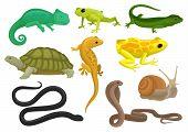 Reptile And Amphibian Set, Chameleon, Frog, Turtle, Lizard, Gecko, Triton Vector Illustration Isolat poster