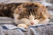 Closeup Of Tabby Cat Sleeping On Blue Duvet poster