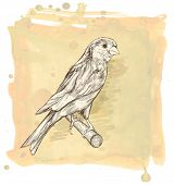 Sketch of a canary bird sitting on a branch & watercolor vintage background. Vector illustration / Eps10