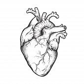 Human Heart Anatomically Correct Hand Drawn Line Art And Dotwork. Flash Tattoo Or Print Design Vecto poster