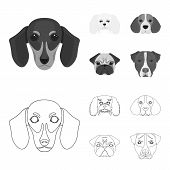 Muzzle Of Different Breeds Of Dogs.dog Breed Of Dachshund, Lapdog, Beagle, Pug Set Collection Icons  poster
