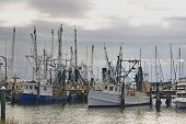 Dawn On The Shrimp Boat Harbor
