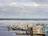 Fleet Of Shrimp Boats
