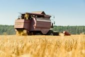 Harvester Machine Working In Field. Agriculture Machine Harvesting Golden Ripe Wheat In Field. Agric poster