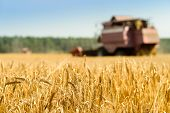 Selective Focus On Golden Ripe Wheat. Agriculture Machine Harvesting Field. Agriculture And Farming  poster